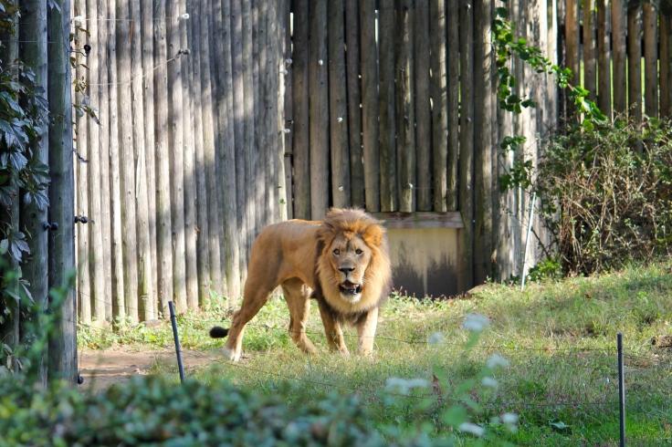 Leon en Bronx Zoo